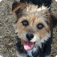 Adopt A Pet :: Clare - Vacaville, CA