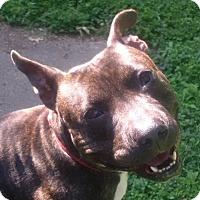Adopt A Pet :: Lewis - St. Louis, MO