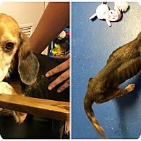 Adopt A Pet :: Suzie - Providence Forge, VA