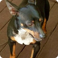 Adopt A Pet :: Tyson - Palm Harbor, FL