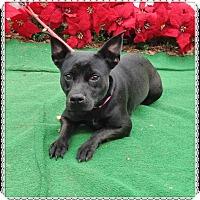 Adopt A Pet :: RAZ - Marietta, GA