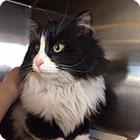 Adopt A Pet :: Beebop - Colorado Springs, CO