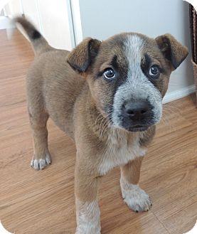 Dog Adoption Manchester Nh