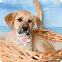 Adopt A Pet :: Micki - Pittsboro, NC