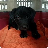 Adopt A Pet :: Muppet - Harmony, Glocester, RI
