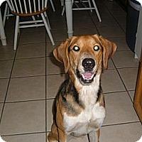 Adopt A Pet :: Chip - Orange Cove, CA