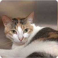 Adopt A Pet :: Livia - New Port Richey, FL