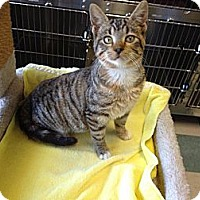 Adopt A Pet :: Nutmeg - Warren, OH