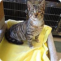 Adopt A Pet :: Nutmeg - Warren, OH