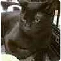 Adopt A Pet :: Salem - Manalapan, NJ