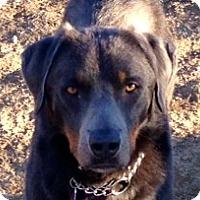 Adopt A Pet :: Dakota - Sacramento, CA