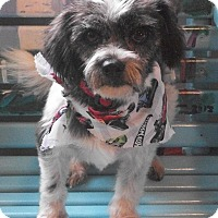 Adopt A Pet :: Randall - Post, TX