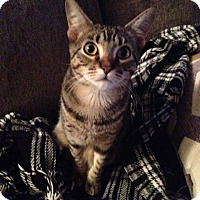 Adopt A Pet :: Drew (RW) - Little Falls, NJ
