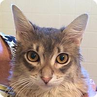 Adopt A Pet :: Samuel - Winchester, CA
