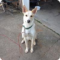 Adopt A Pet :: Piper - Marietta, GA