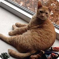 Adopt A Pet :: JoJo - Muskegon, MI