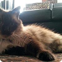 Adopt A Pet :: Kika - Whittier, CA