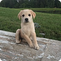 Adopt A Pet :: Jezebel - Russellville, KY
