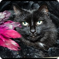 Adopt A Pet :: Sparkles - Brick, NJ