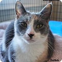 Adopt A Pet :: Delilah - Danielsville, GA