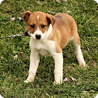 Adopt A Pet :: Ashton - Plainfield, CT