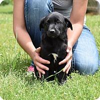Adopt A Pet :: Warner - Groton, MA