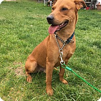 Adopt A Pet :: Captain - New Oxford, PA