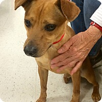 Adopt A Pet :: Tucker in CT - Manchester, CT