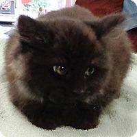 Adopt A Pet :: #3 - Lebanon, PA