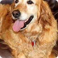 Adopt A Pet :: Riley (PLACED) Adoption_Pending - Glendale, AZ