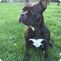 Adopt A Pet :: Winnie - Framingham, MA