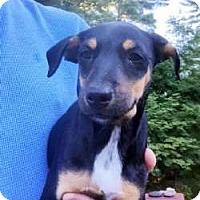 Adopt A Pet :: Kiki - Sudbury, MA