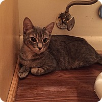 Adopt A Pet :: Maharet - Chesapeake, VA
