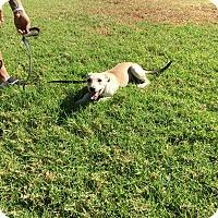 Adopt A Pet :: Ginger - El Cajon, CA