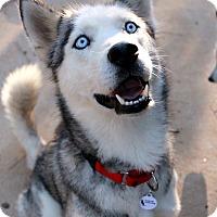 Adopt A Pet :: Malakai ~Bonded~ - Youngsville, NC