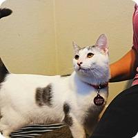 Adopt A Pet :: Stymie (Lover Boy!) - San Diego, CA