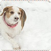 Adopt A Pet :: Winnie - Hainesville, IL