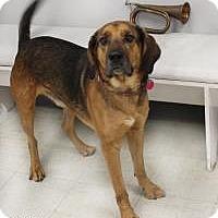 Adopt A Pet :: Faelon - Yukon, OK