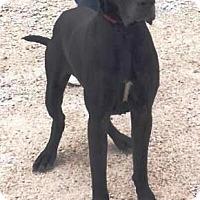 Adopt A Pet :: Murphy - Oswego, IL
