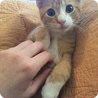 Adopt A Pet :: Fitch - Gainesville, FL