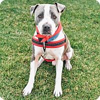 Adopt A Pet :: Geronimo-ADOPT Me! - Redondo Beach, CA