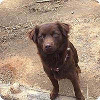 Adopt A Pet :: Dottie - Charlotte, NC
