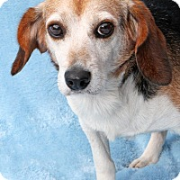 Adopt A Pet :: Van Go - Encinitas, CA