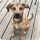 Adopt A Pet :: Chandler