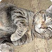 Adopt A Pet :: Esmerelda - Cypress, TX