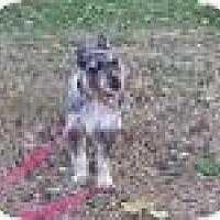Adopt A Pet :: Perry - Springfield, MO