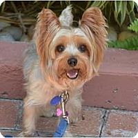 Adopt A Pet :: Jezebel - Miami, FL