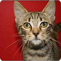 Adopt A Pet :: CONNOR - SILVER SPRING, MD