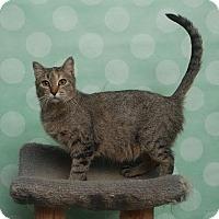 Adopt A Pet :: Yasmin - Chippewa Falls, WI