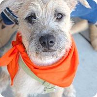 Adopt A Pet :: Amarillo - Sunnyvale, CA